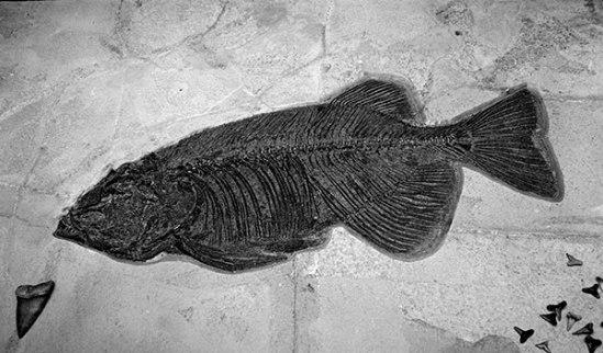 PlamenPetkov_Fossil1